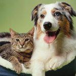Câine sau pisică