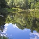 Nuferi  Lacul Mic Dognecea