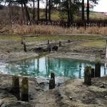 Rezervaţia cu nuferi de la Băile 1 Mai a dispărut