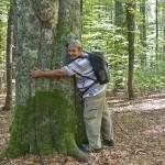 O plimbare tematică prin păduri de fag