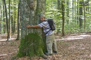 Pădurile virgine - păduri de fag