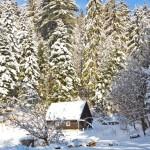 Cabanuta la Buhiu iarna