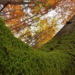 Parteneriat strategic pentru protejarea pădurilor din România