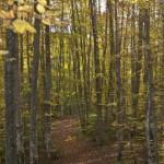 toamnă în pădure
