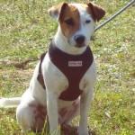 Câini – accesorii şi echipamente pentru întreţinere