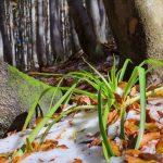 Toamna cu puţin miros de iarnă – scurtă tură foto pe Semenic