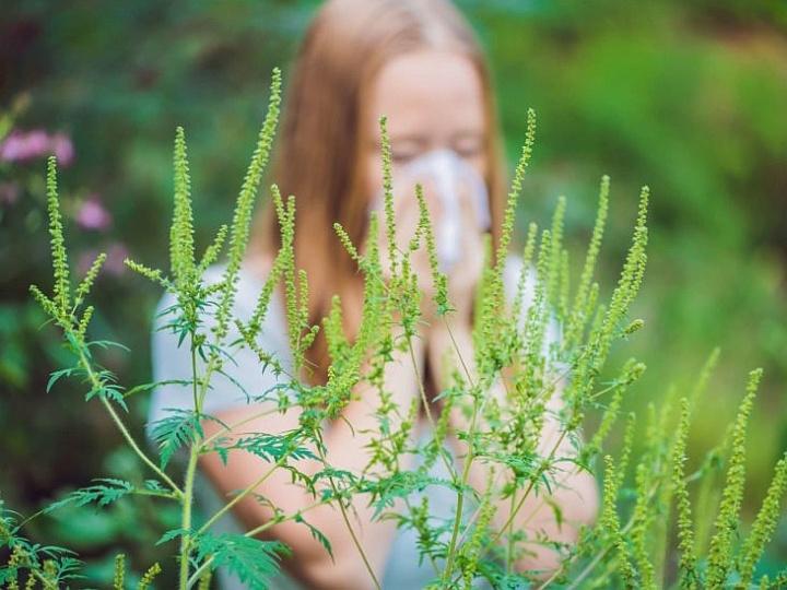 Rinita alergica - sniztop